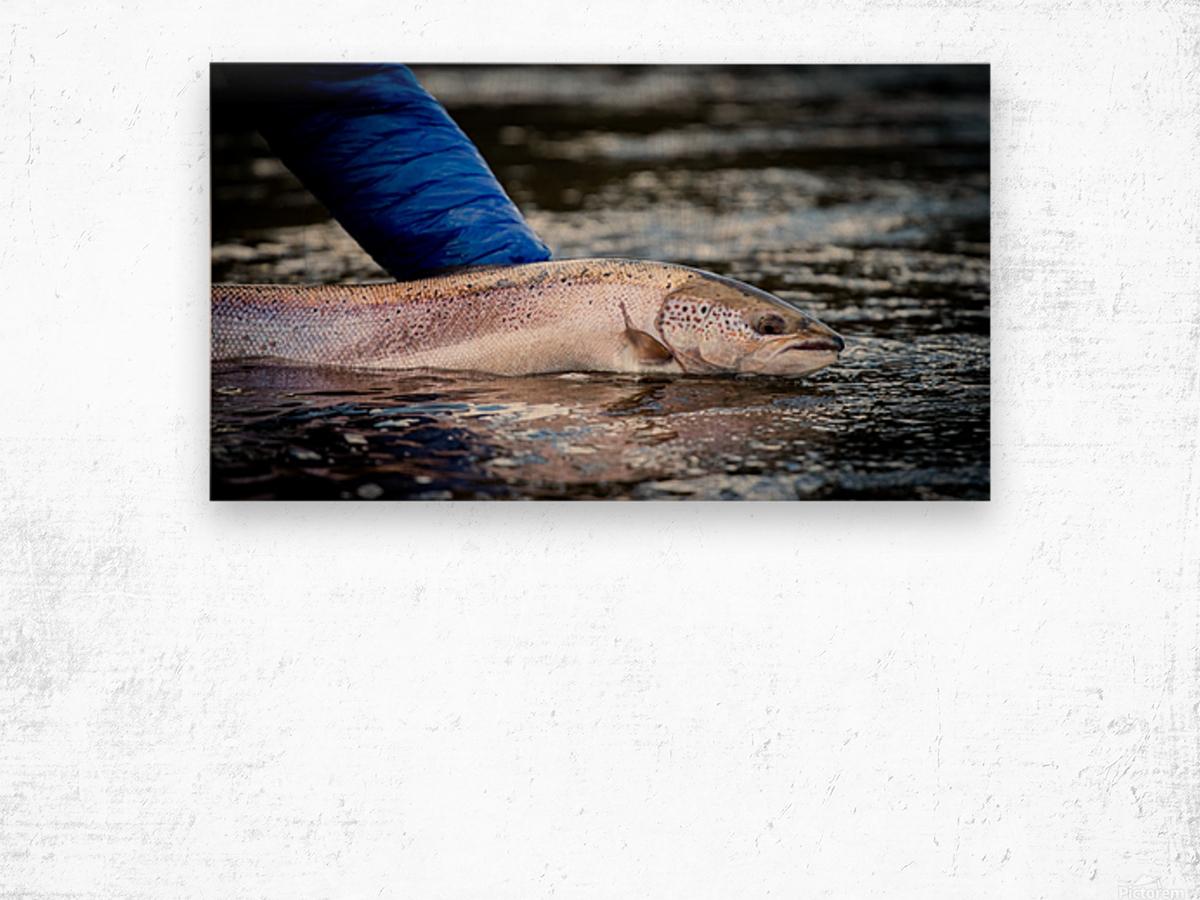 Salmon release Wood print