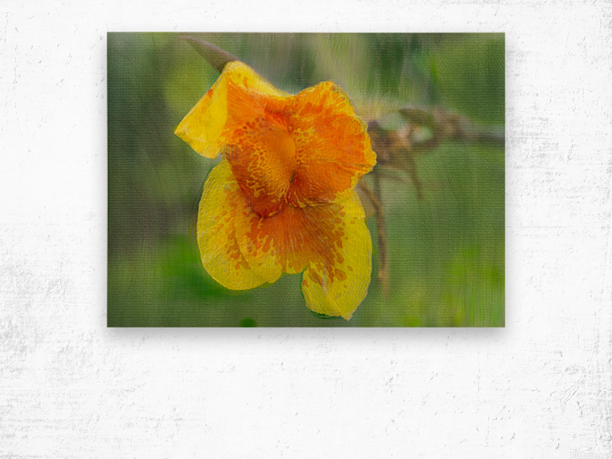 Canna Lily Digital Painting 52 70 200px Wood print