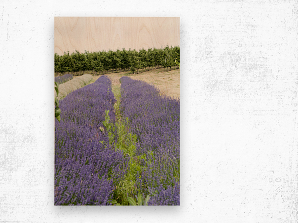 Lavender plants and fruit trees 6 Wood print