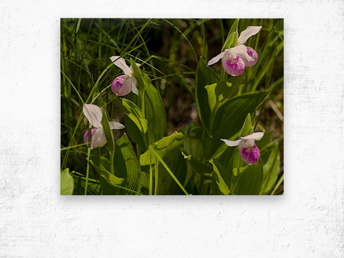 Pink Ladys Slippers 1 Wood print