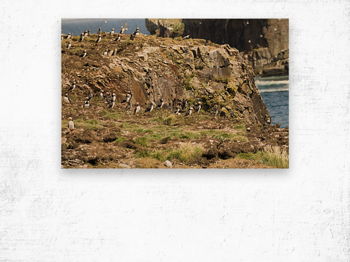 Puffins being puffins 5 Wood print
