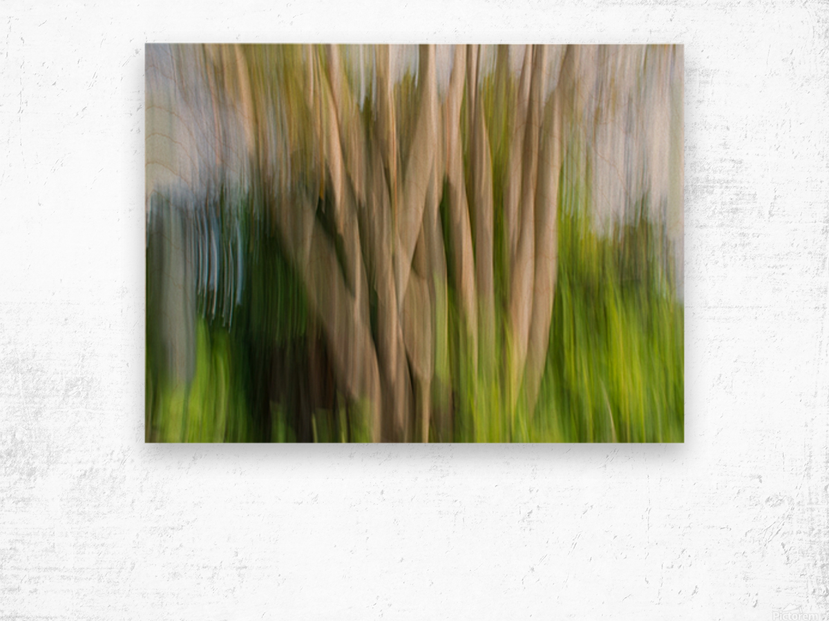 Moving Trees 30 Landcape 52 70 200px Wood print