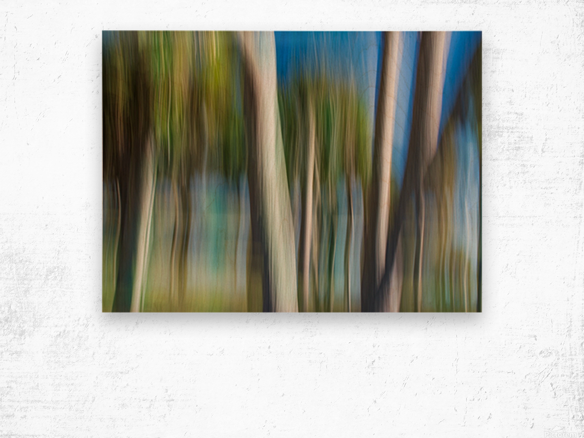 Moving Trees 31 Landcape 52 70 200px Wood print