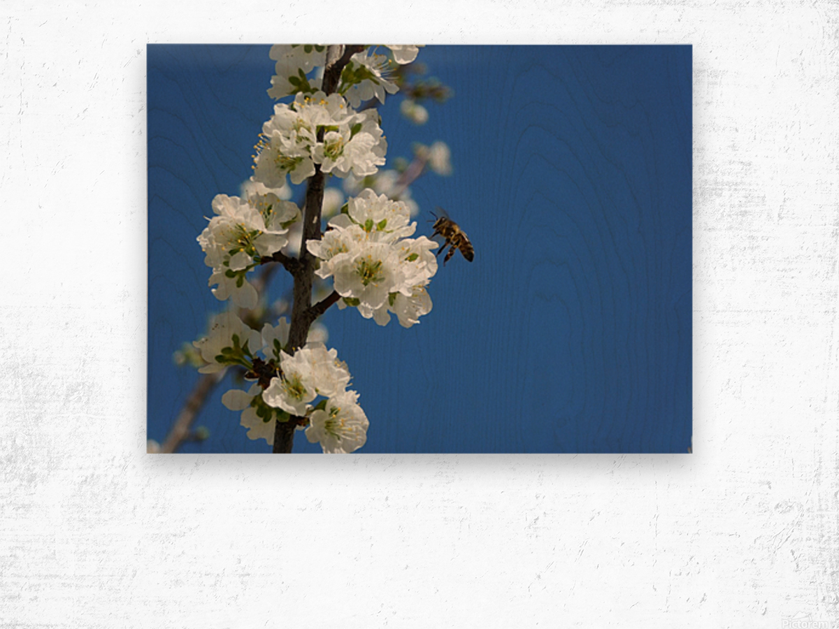 bee and flowers and blue sky Wood print