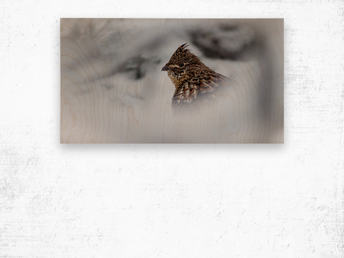 Winter Ruffed Grouse Wood print