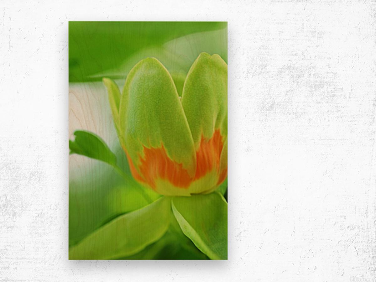 Yellow Poplar Flower Wood print