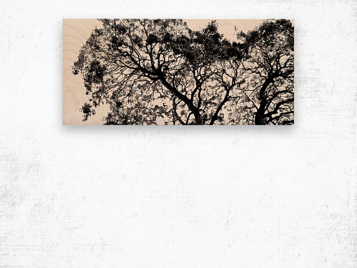 Tree Top Wood print