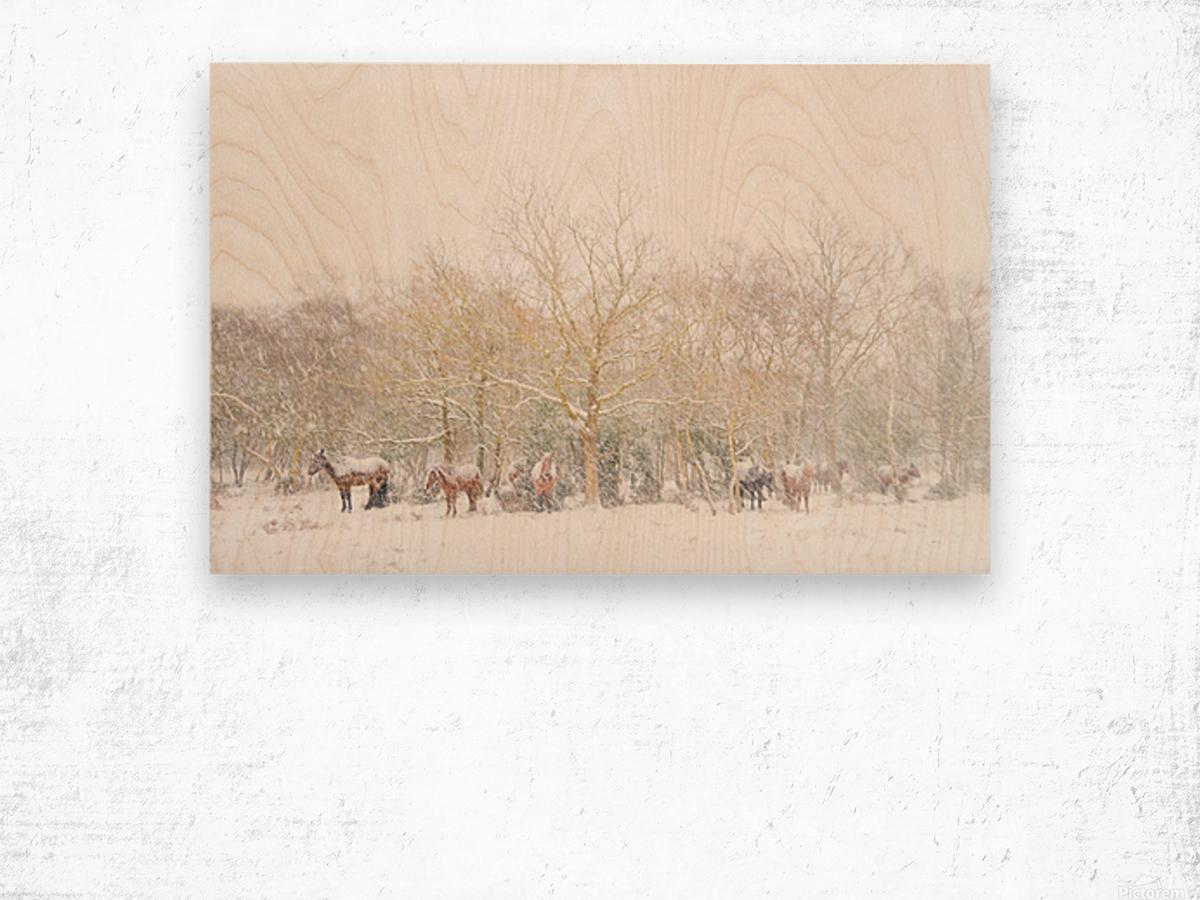 SNOW HORSES 3. Wood print