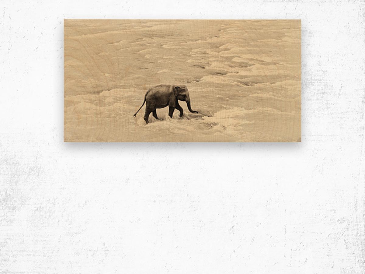 RIVER ELEPHANTS 5. Wood print