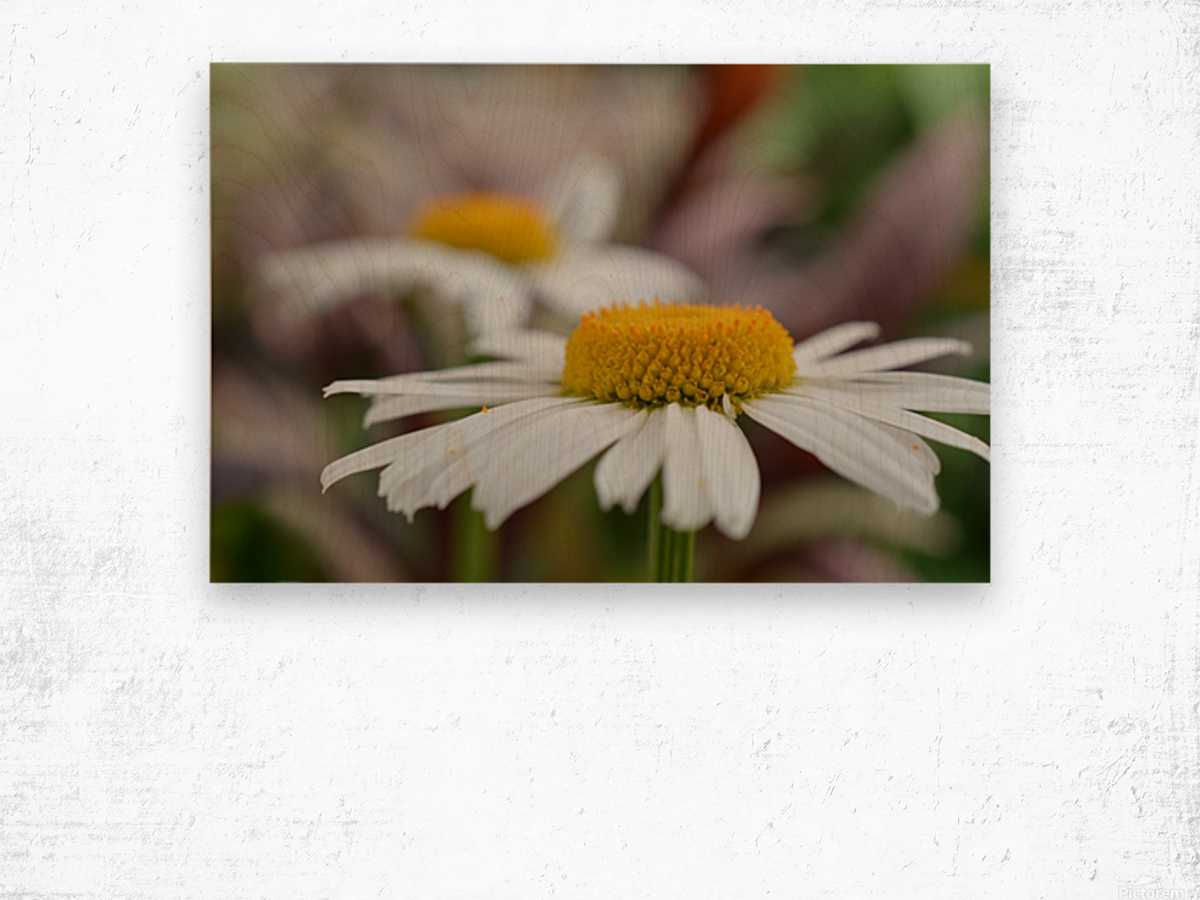 White Flower Photograph Wood print