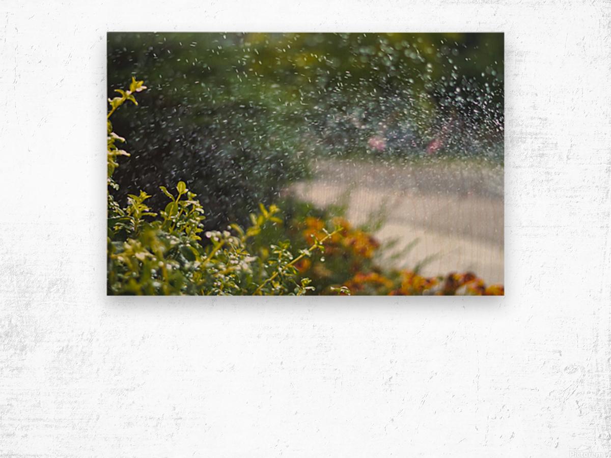 DSC_0396 Wood print