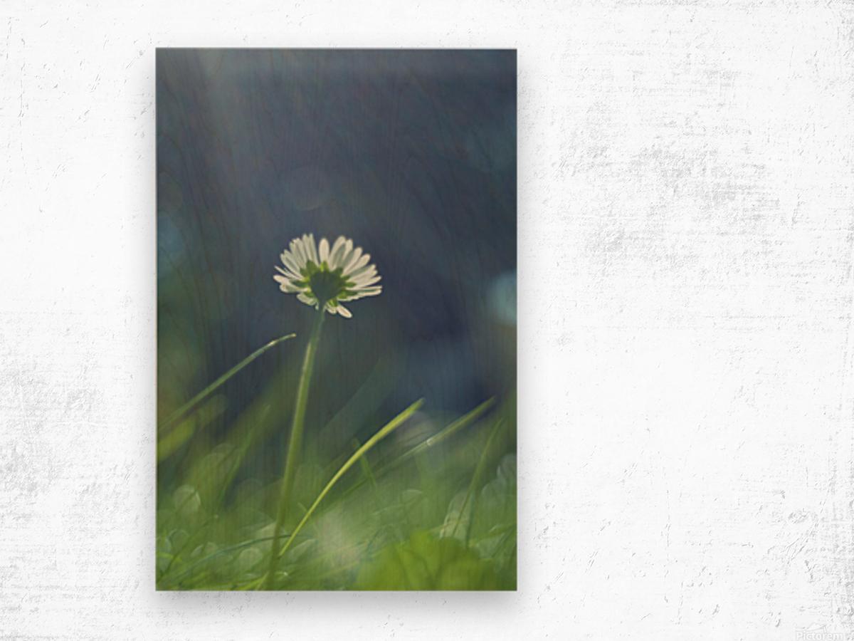 DSC_0245 Wood print