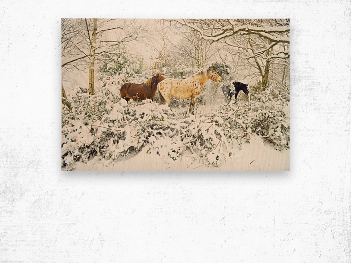 SNOWY APPALOOSA Wood print