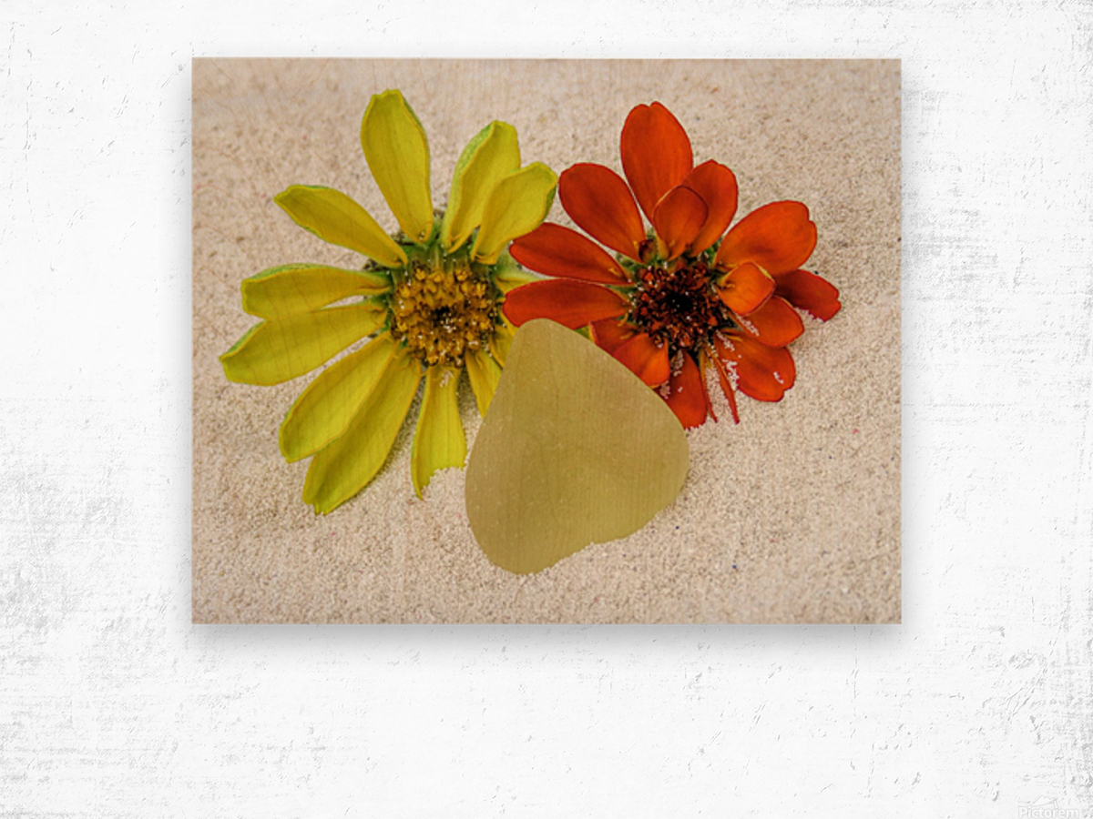 Pale yellow sea glass and zinnias Wood print