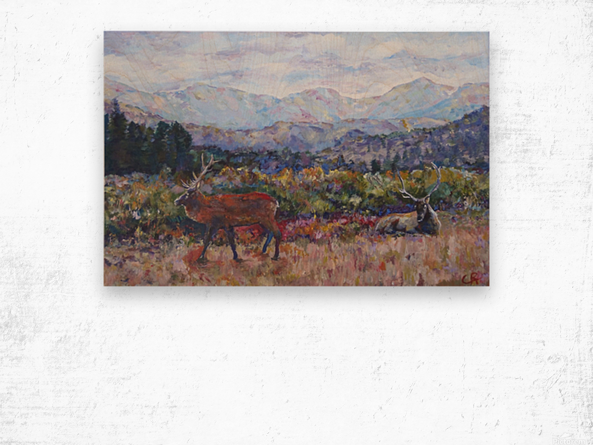 Rocky Mountain Park Elk  Wood print