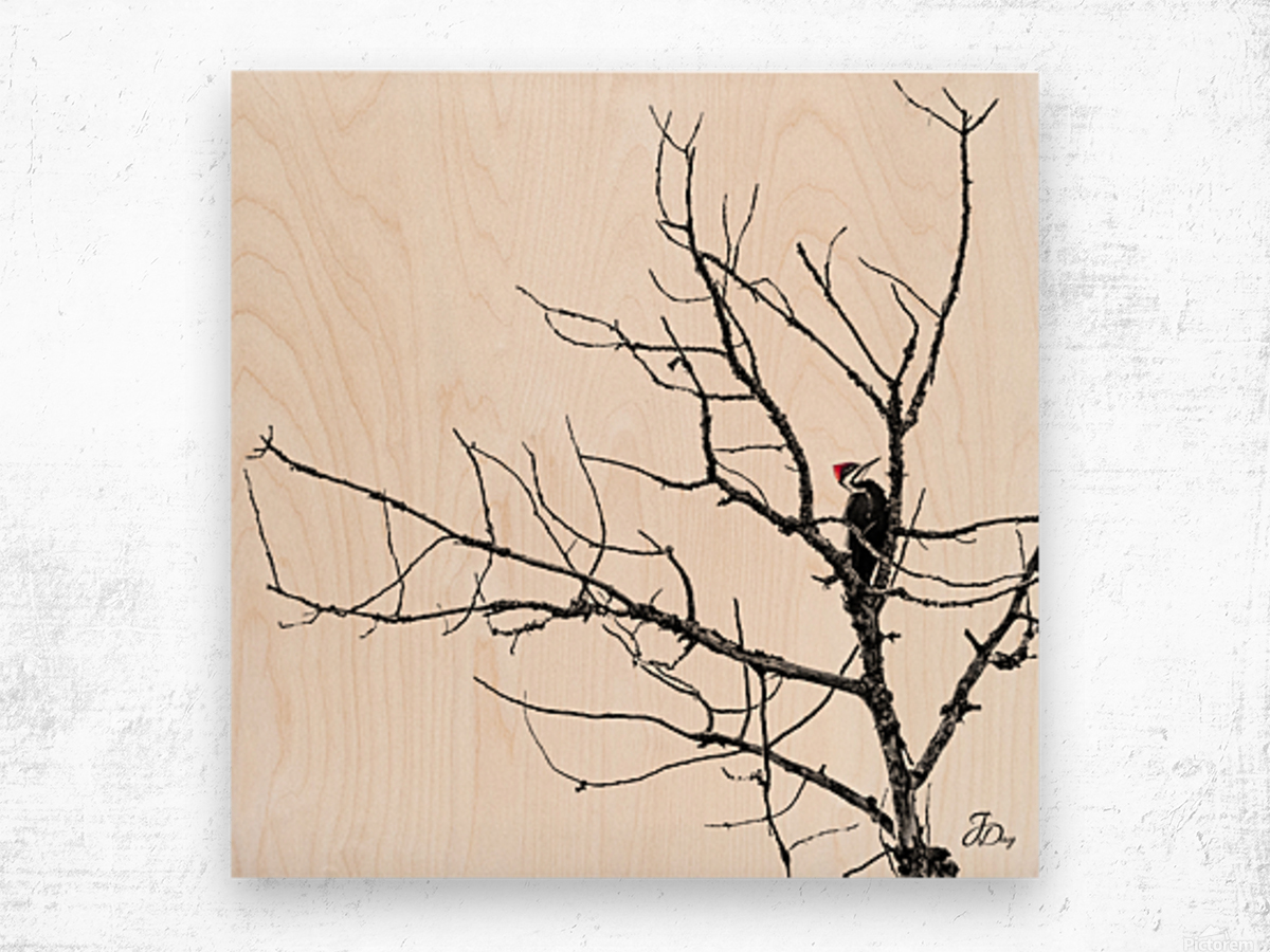 Pileated Woodpecker - Square Wood print