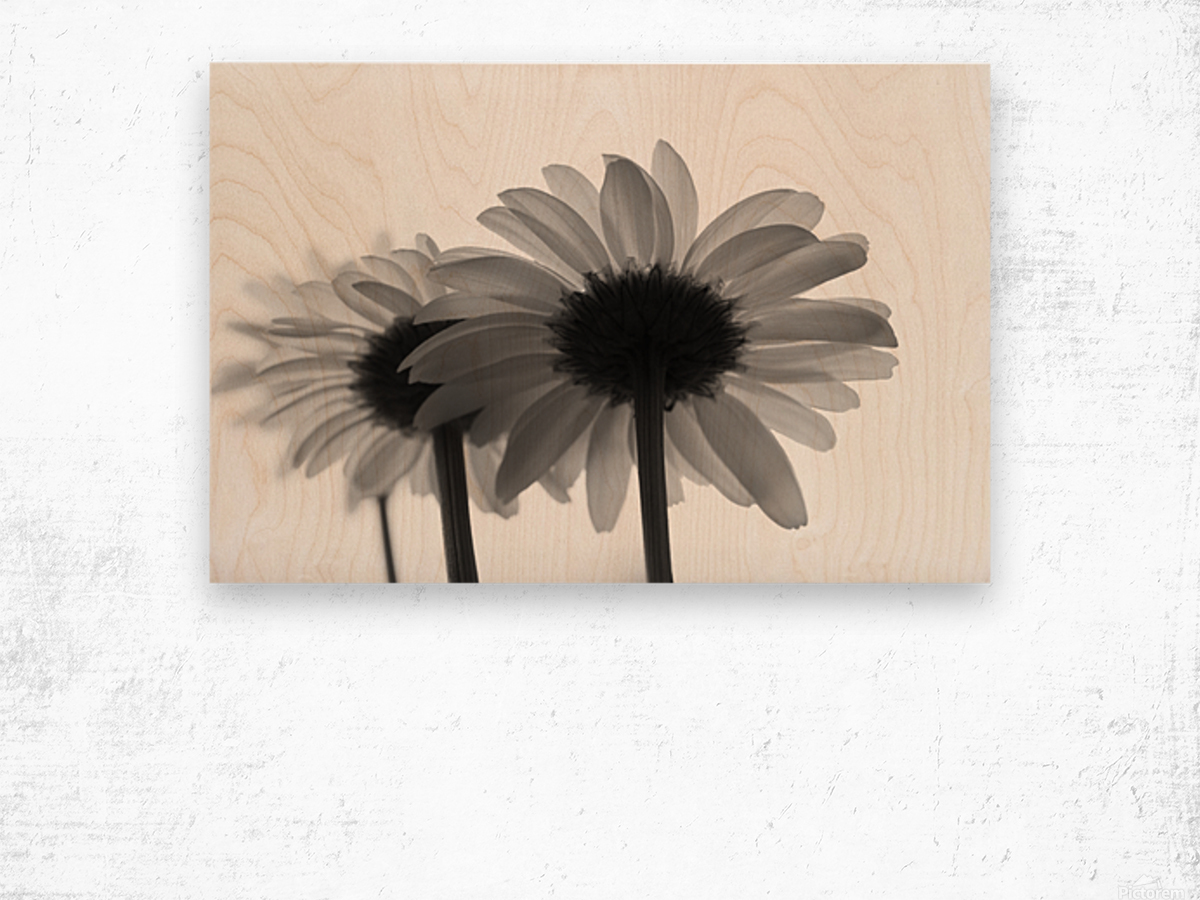 Daisies Rowing To The Left BW Wood print