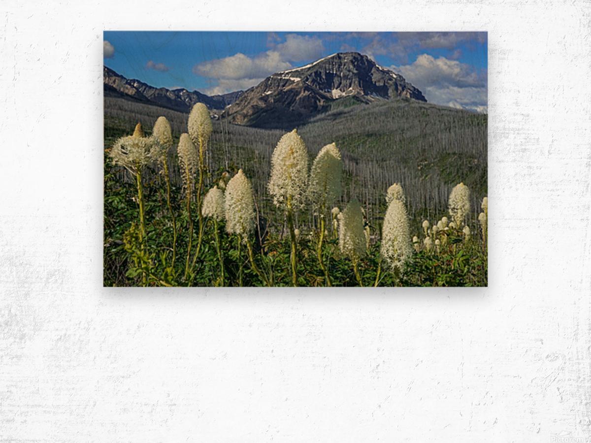 Bear Grass Fields Wood print