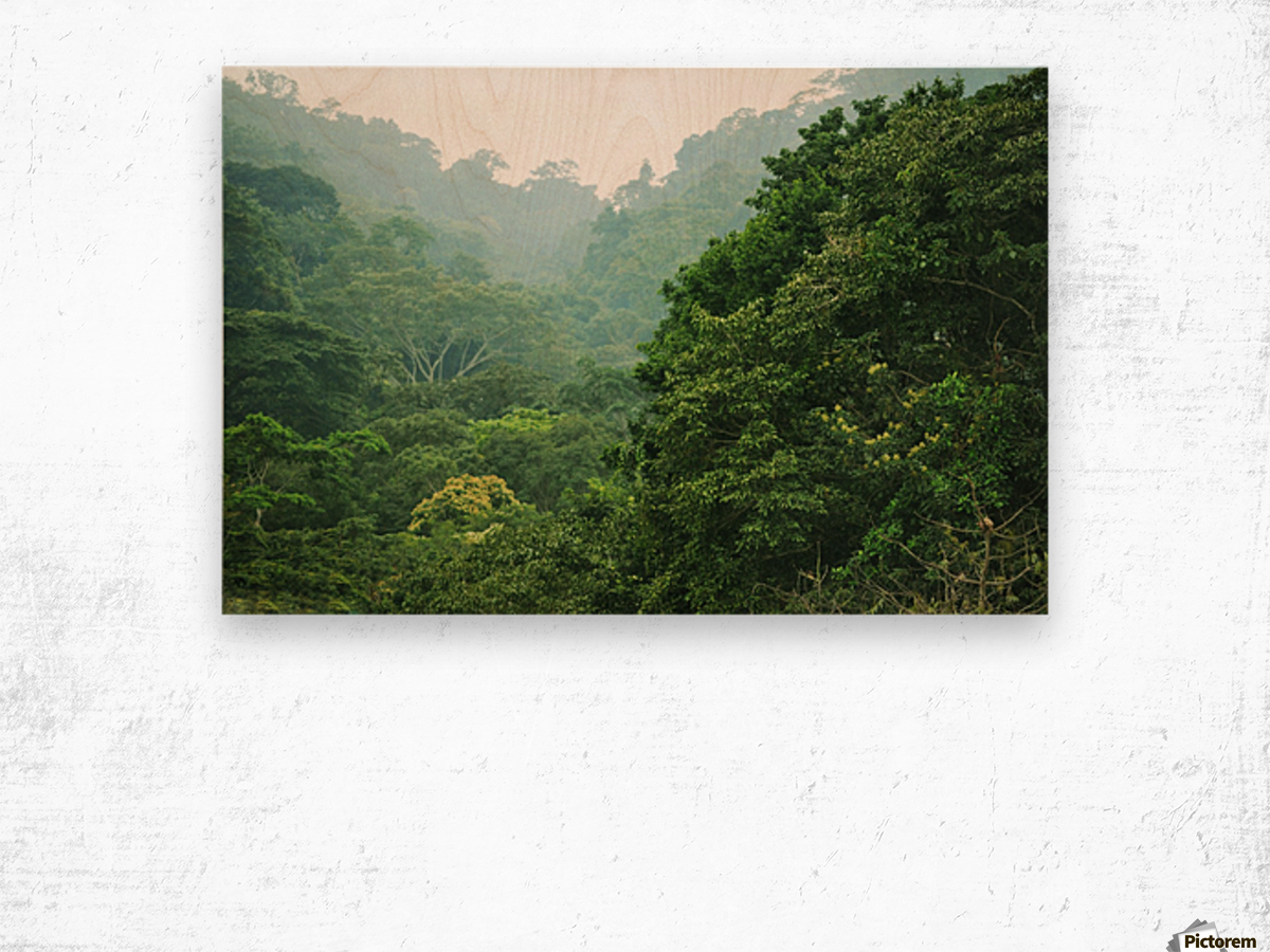 Rainforest Canopy Wood print
