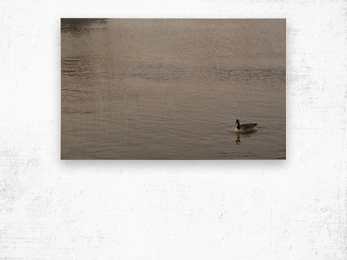 At Rest Wood print