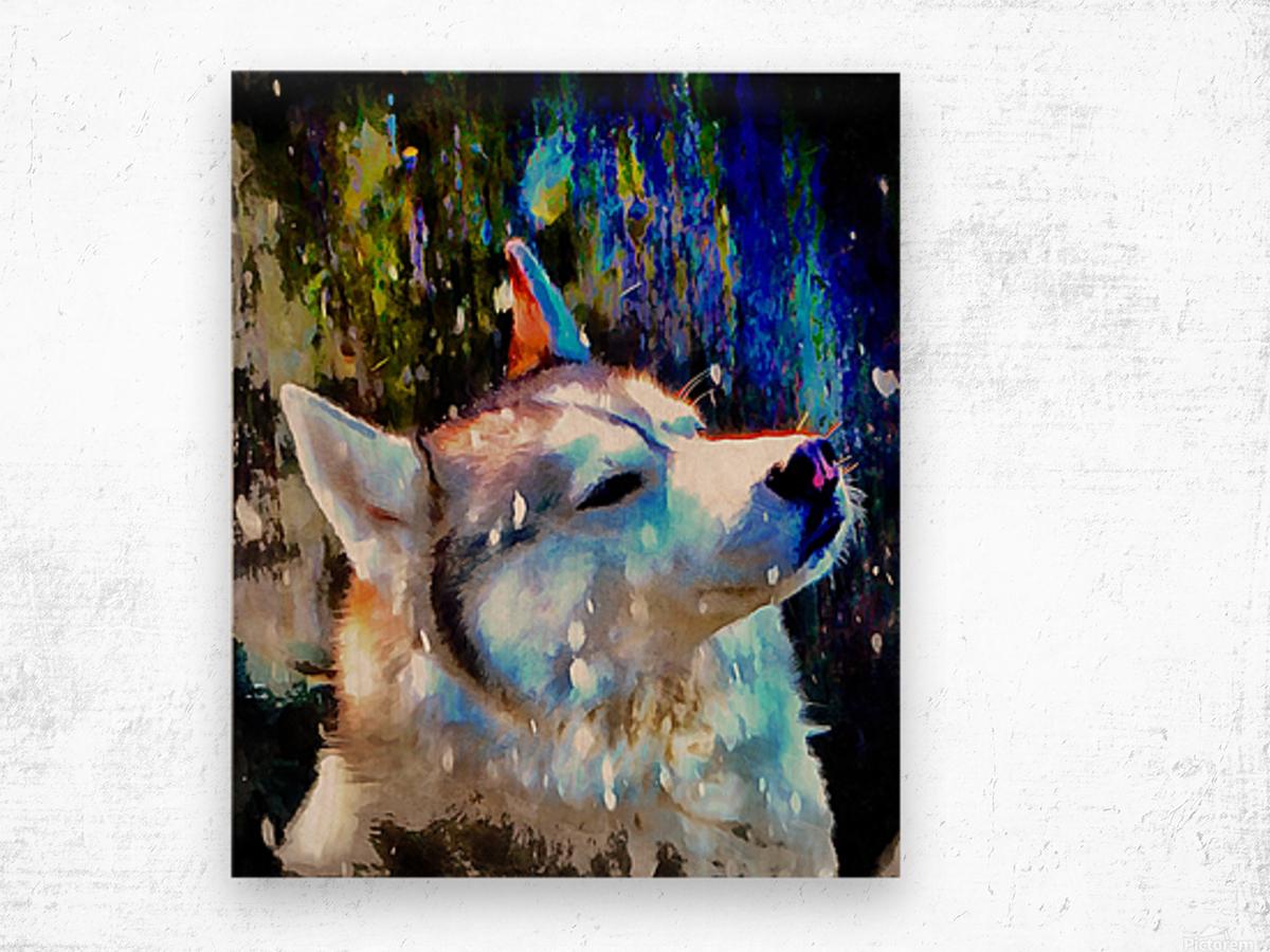 Husky Enjoying the Snow Wood print