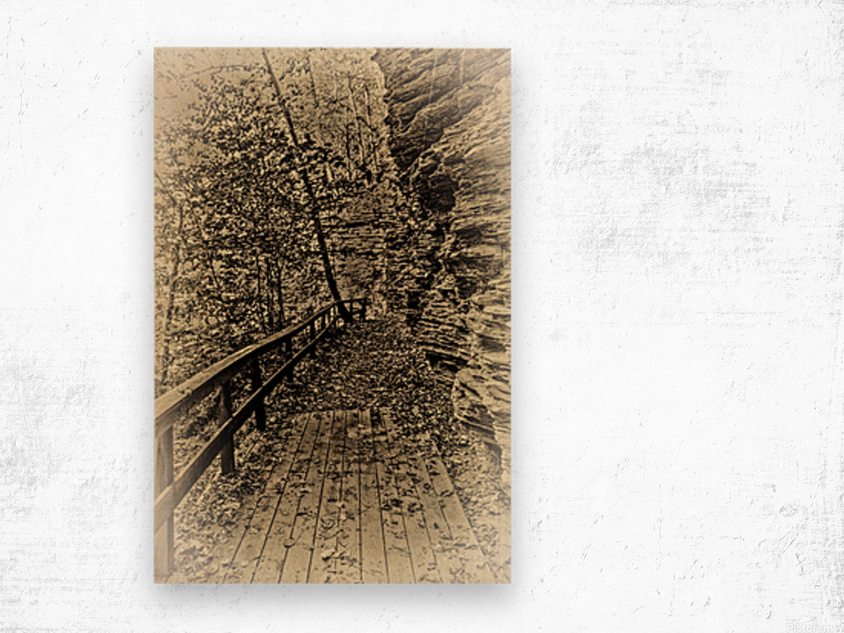 Pathway in Sepia Wood print