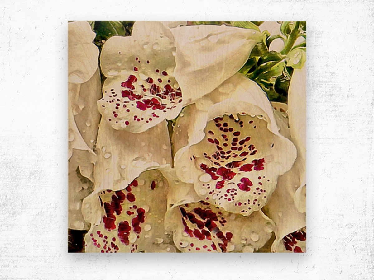 White Foxgloves with Raindrops Wood print