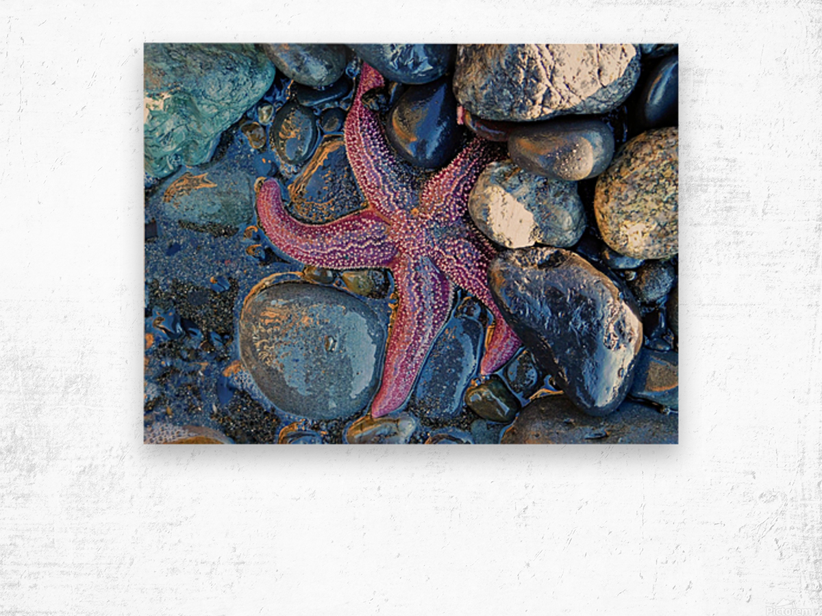 Low Tide Starfish Wood print