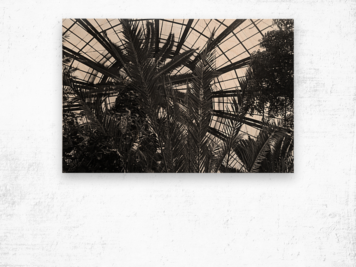 Bell Isle Conservatory Dome 1 BW Wood print