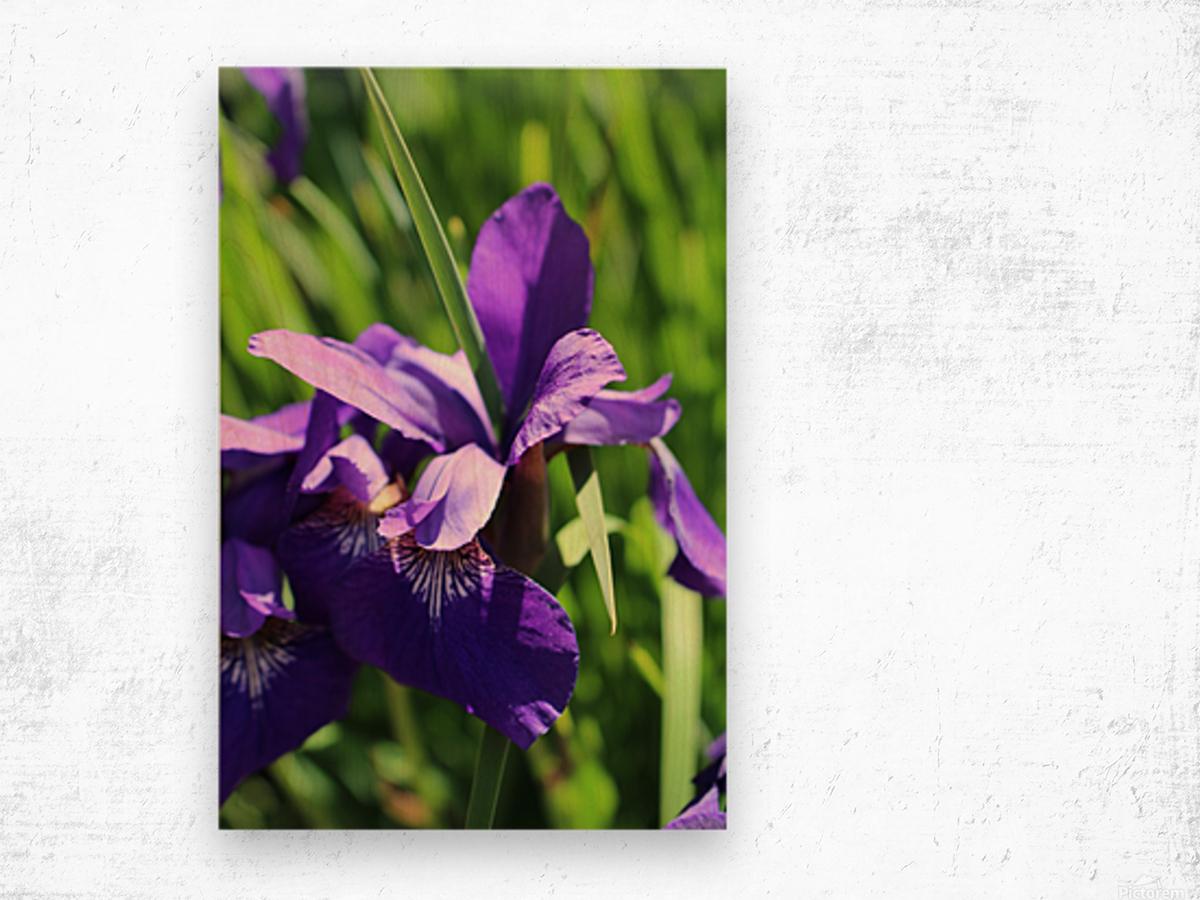 Purple Iris Impression sur bois