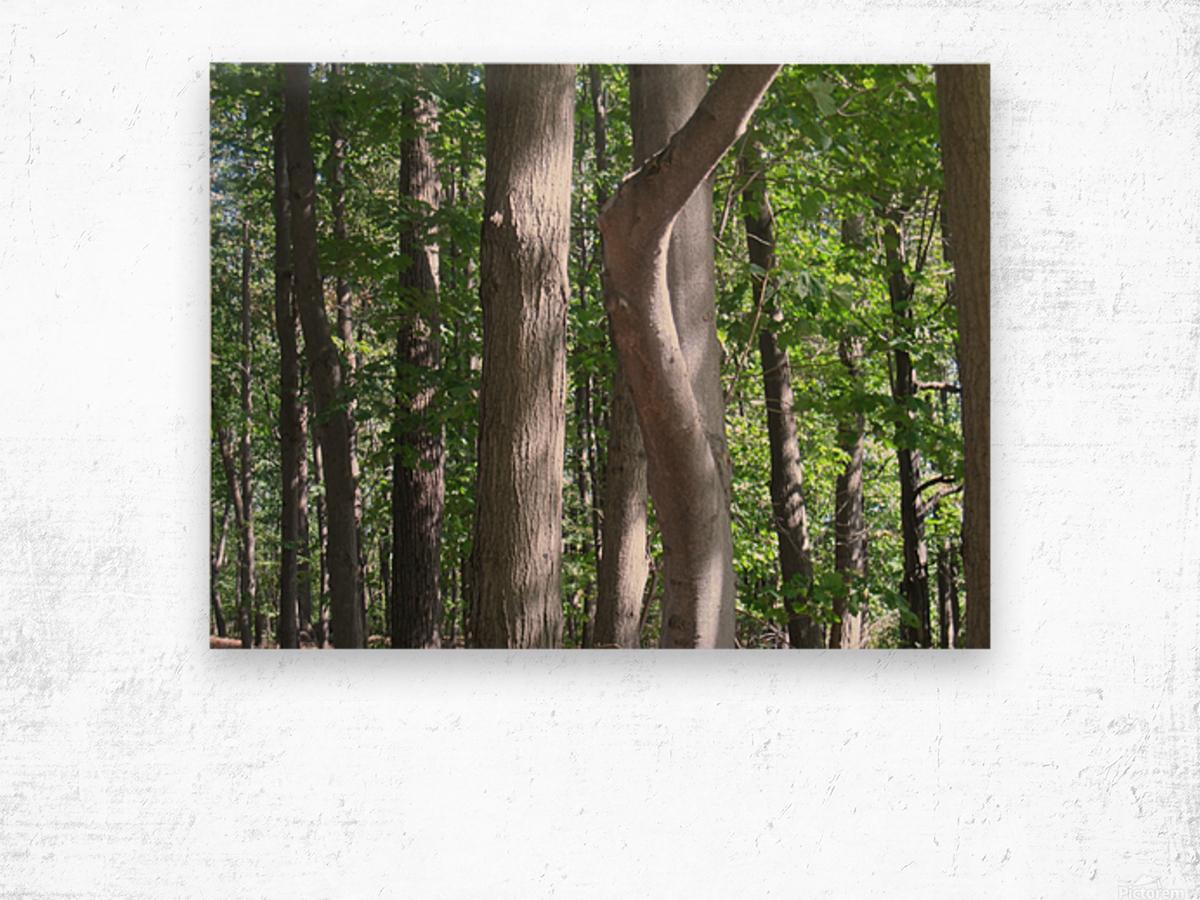 Landscape (267) Wood print