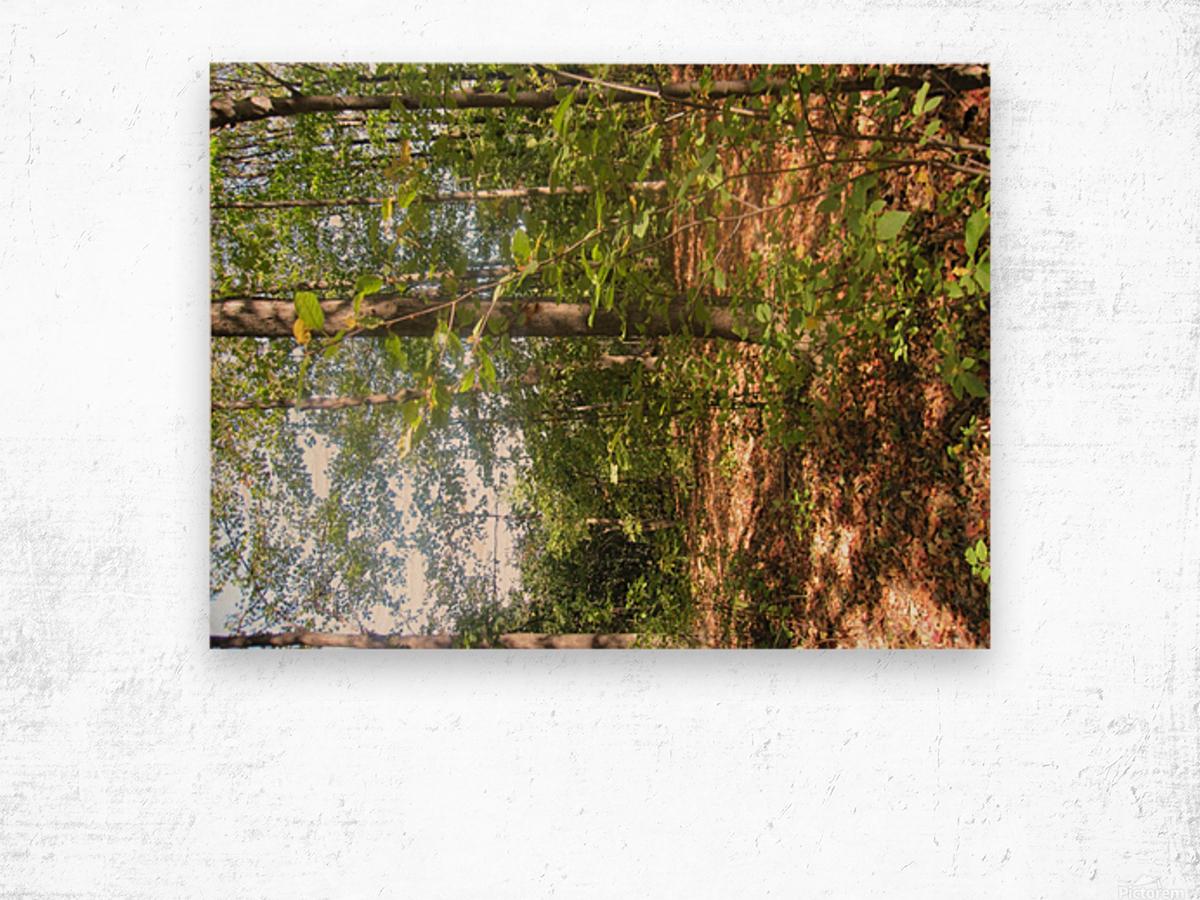 Landscape (105) Wood print