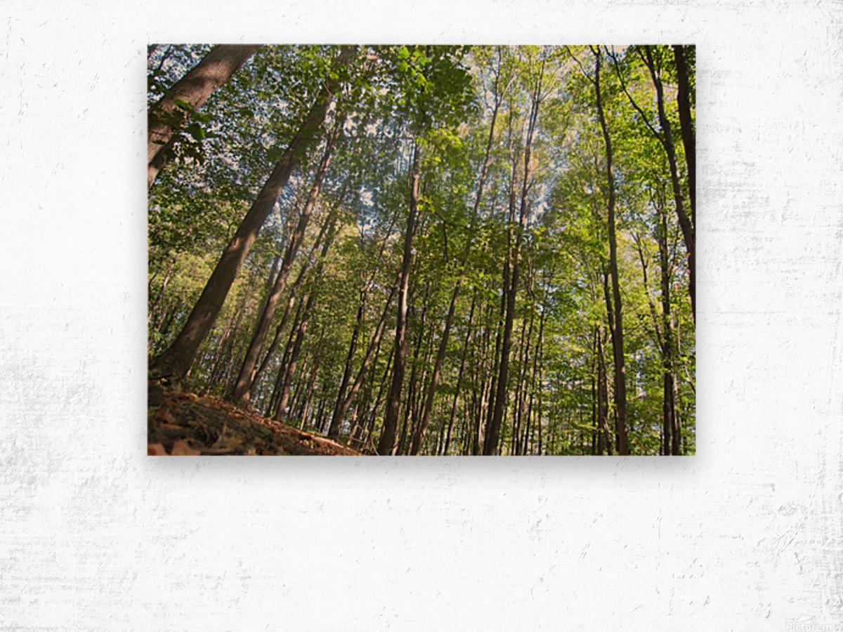 Landscape (249) Wood print