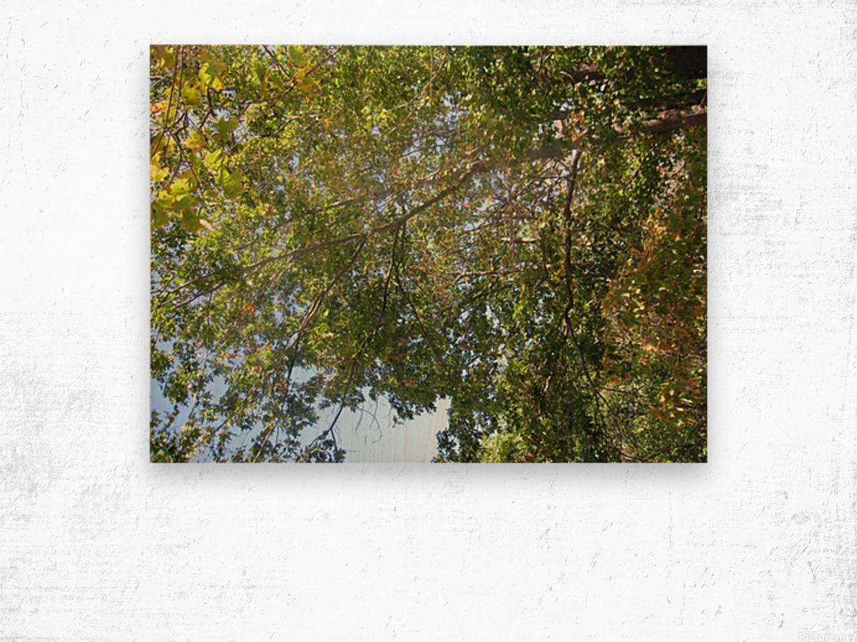 Landscape (302) Wood print