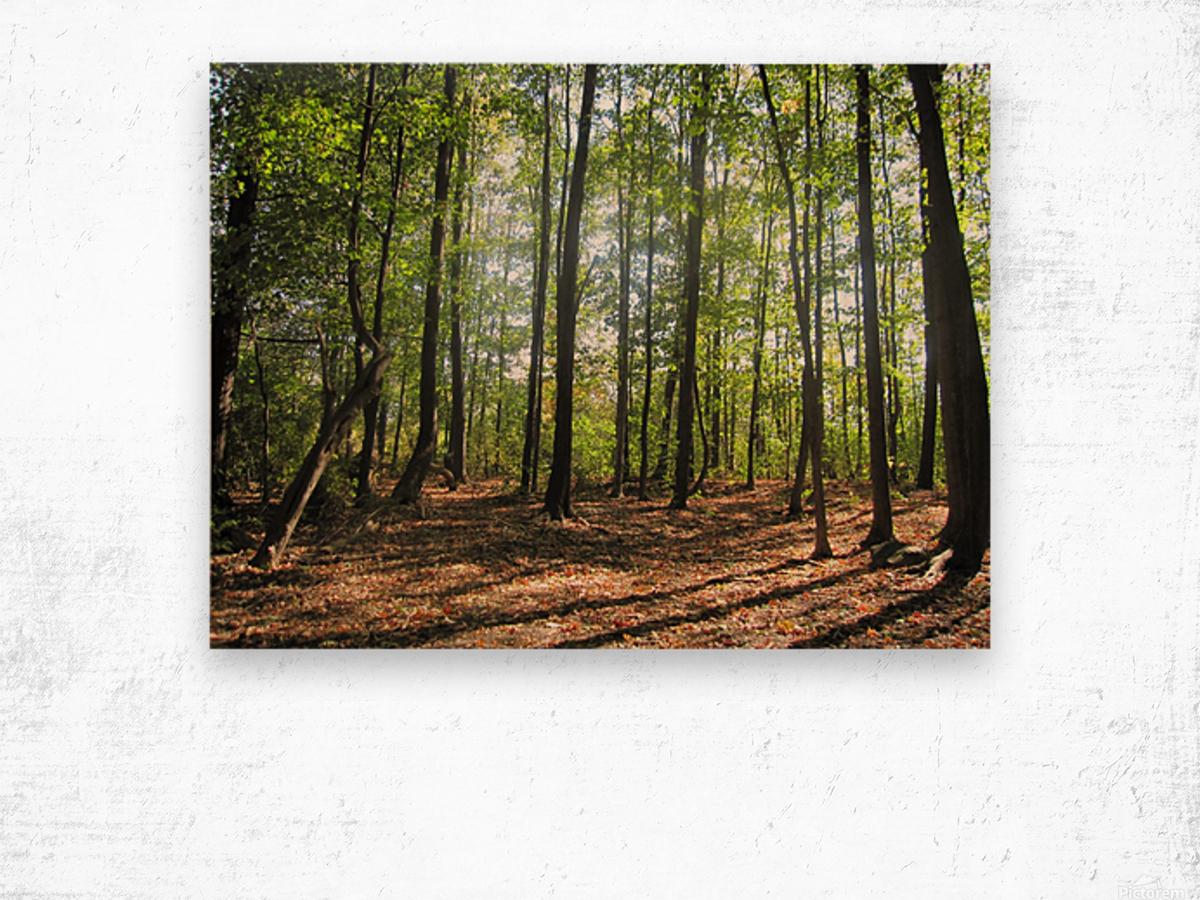 Landscape (37) Wood print