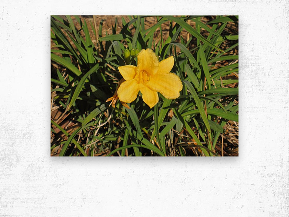 Flowers (35) Wood print