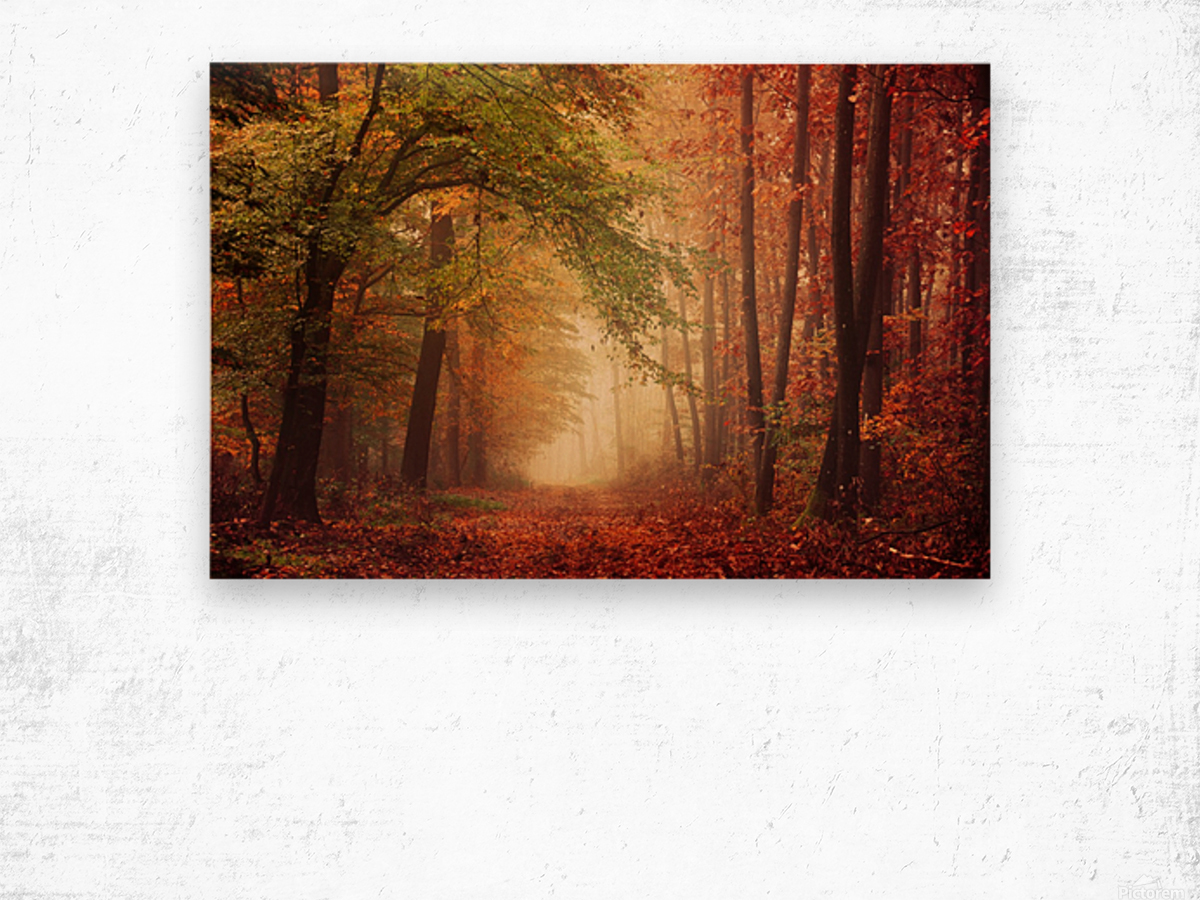 Colorful autumn forest Wood print