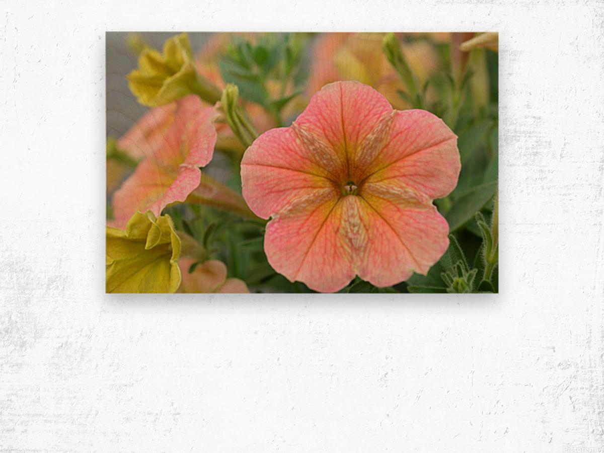 Orange Flowers Photograph Wood print