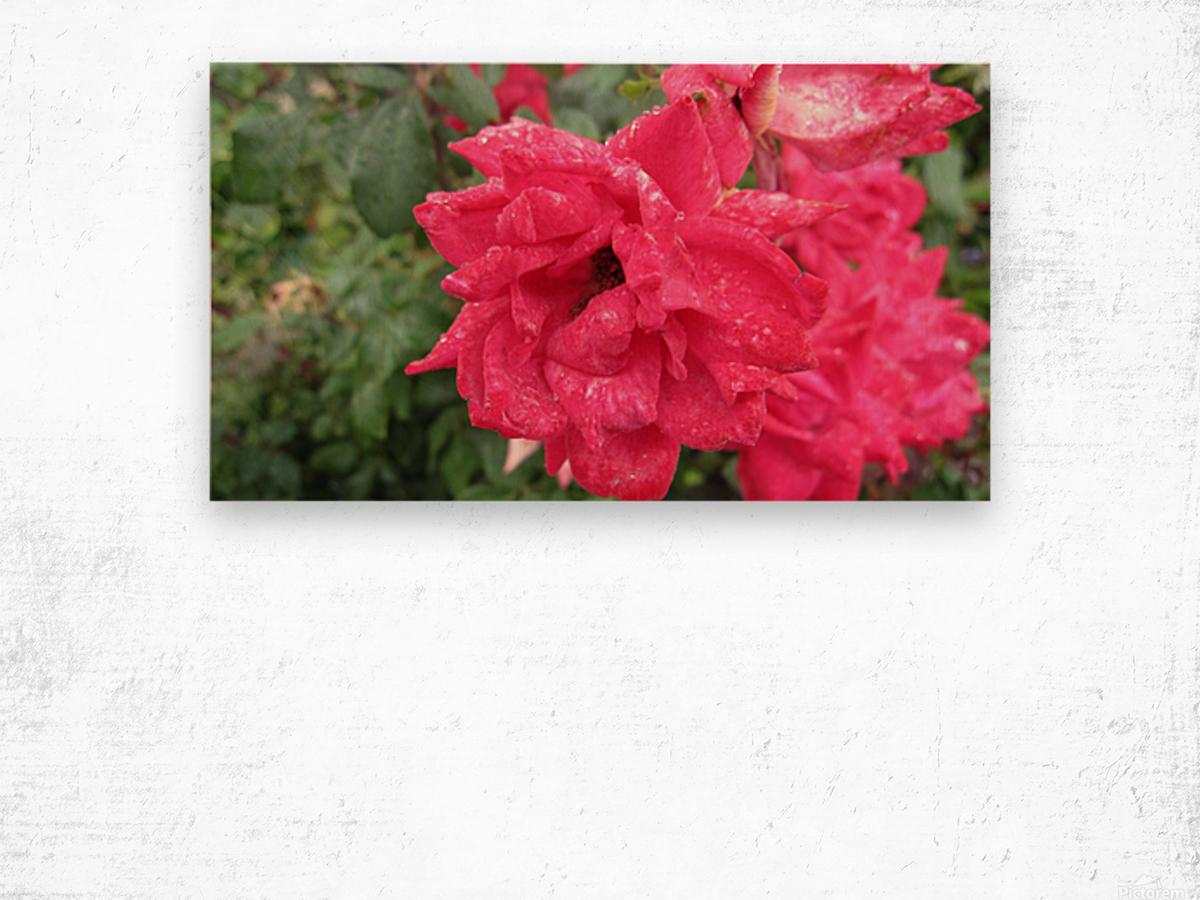 Flower (9) Wood print