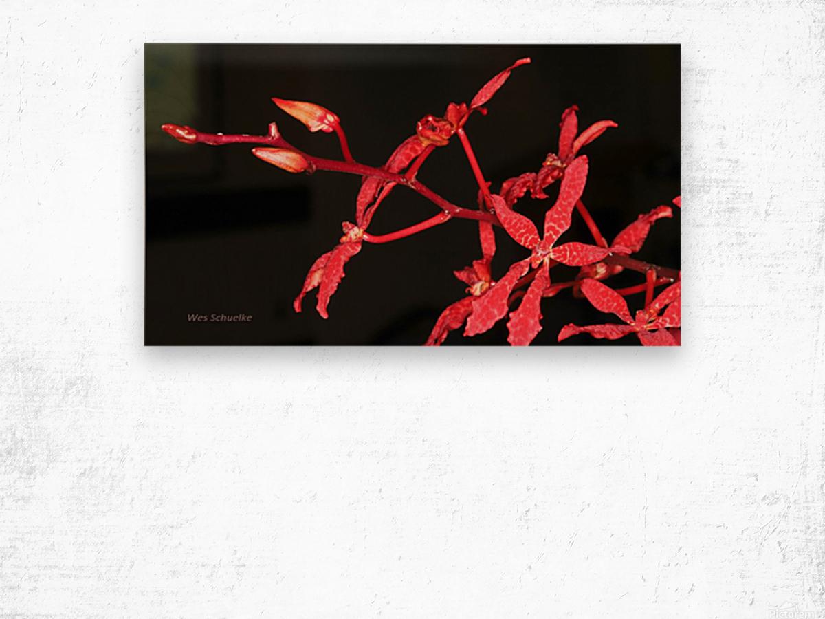 IMG_0124_a_WS Wood print