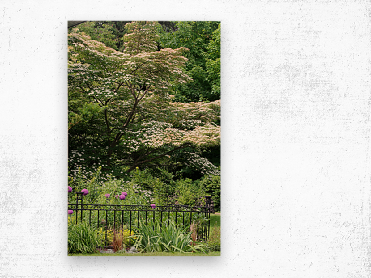 Garden with Dogwood 2018 Wood print