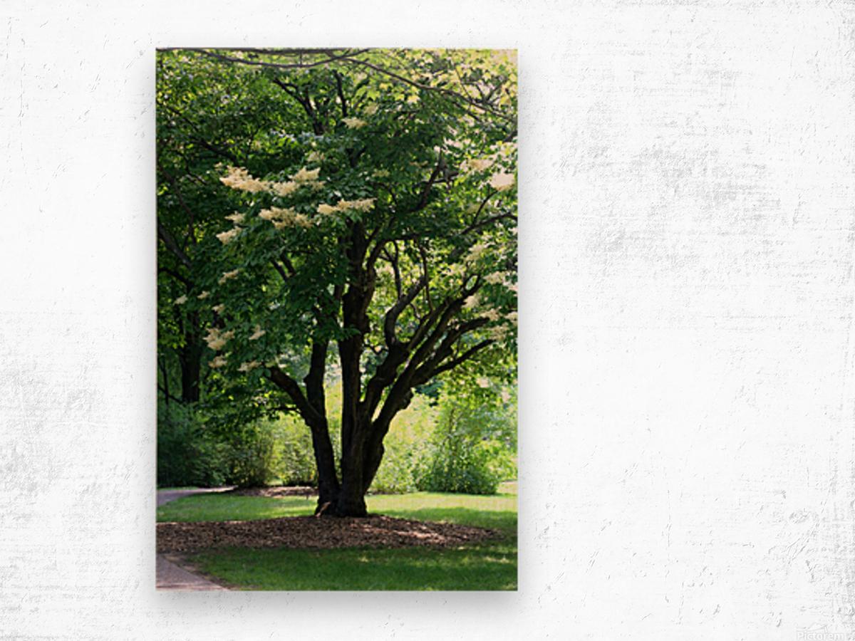 Japanese Lavender Tree Dow Gardens 2018 Wood print