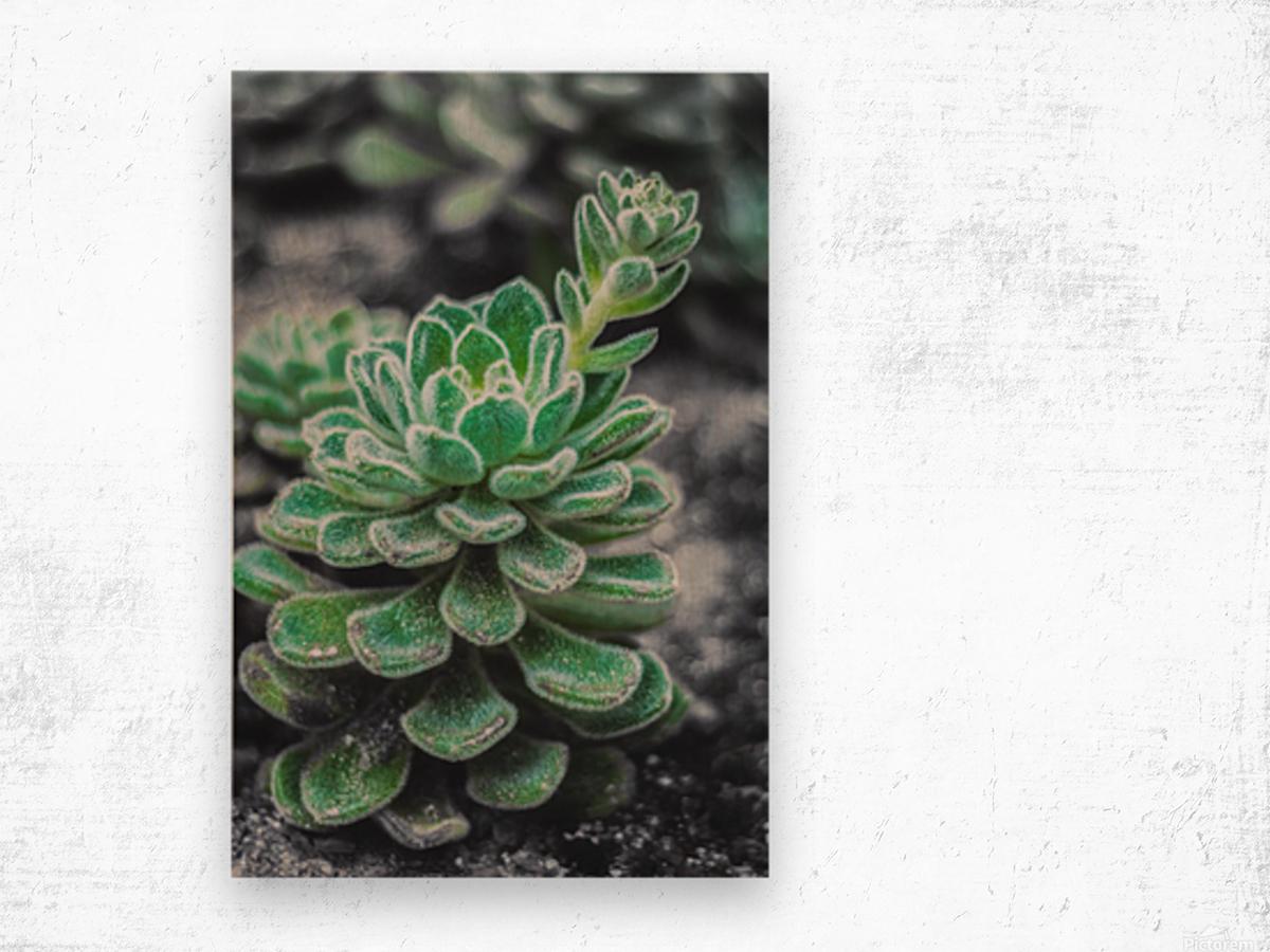 Sweetyplant Wood print