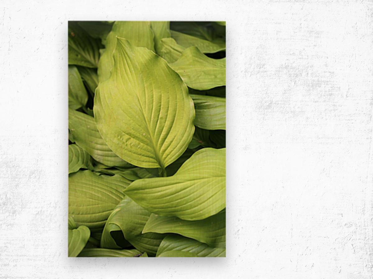 Softly Curving Foliage 062618 Wood print