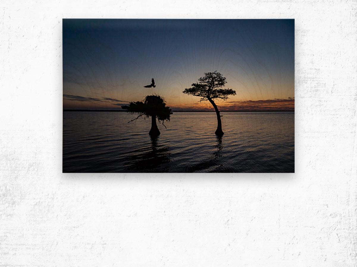 Sunrise on the Nest Wood print