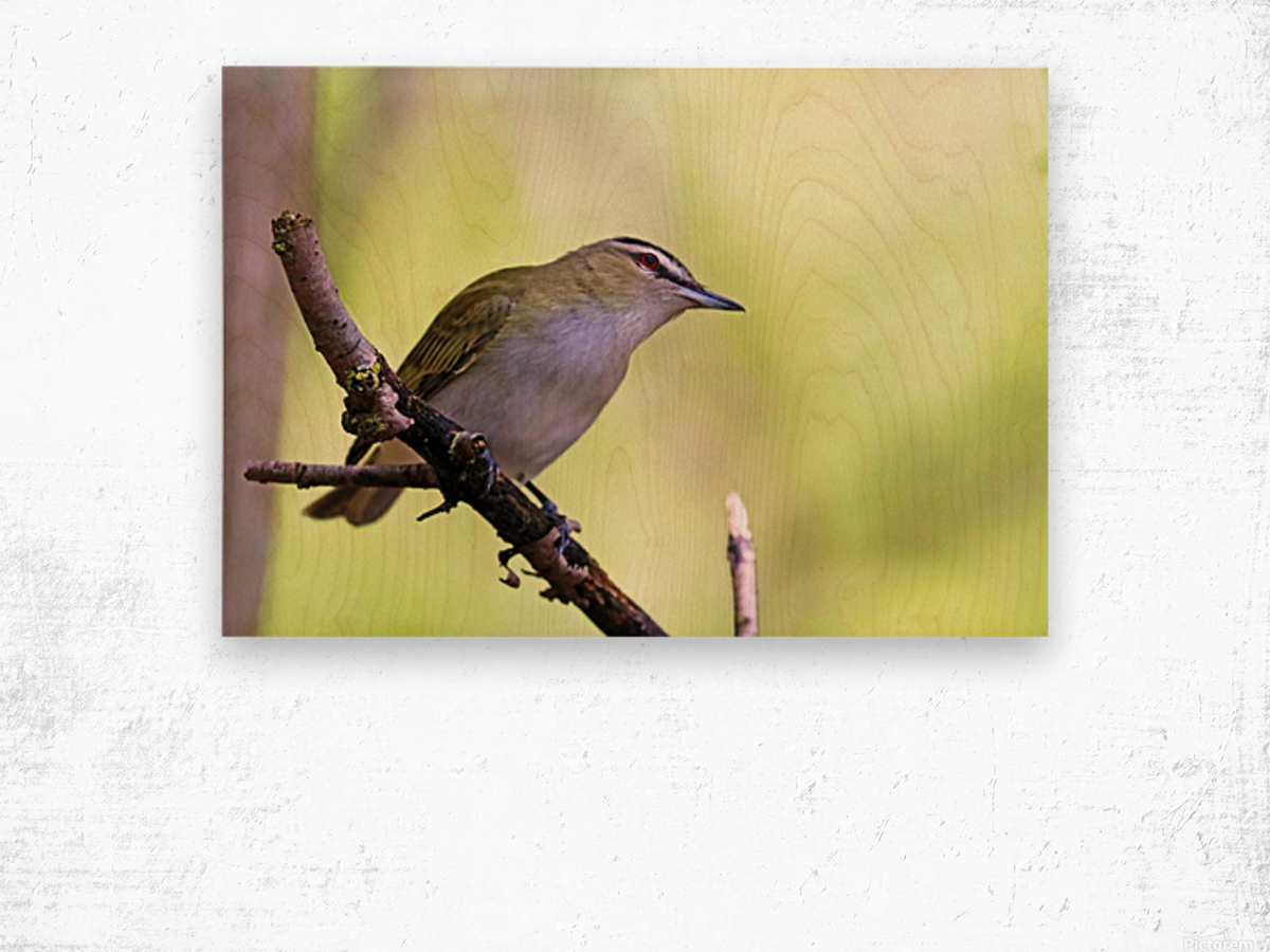The Tireless Songster Wood print