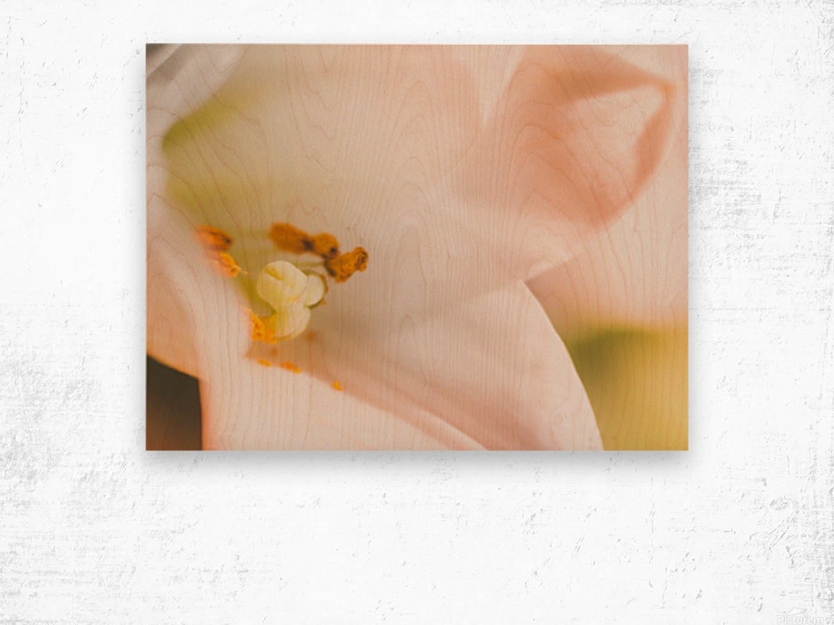 Easter Lily - Lilium Longiflorum - Flower Lily - Yellow White Close-Up Macro Wood print