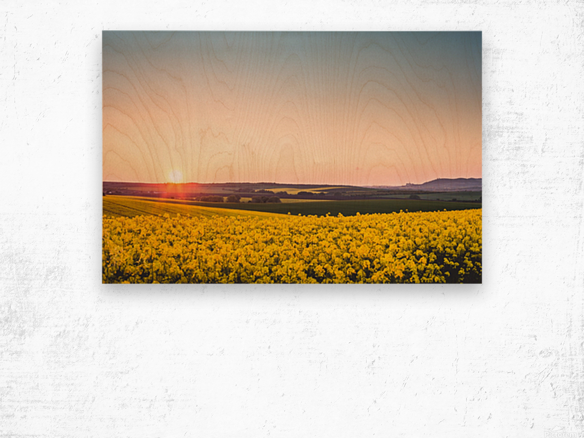 Beautiful sunset over the yellow rapeseed field. Wood print