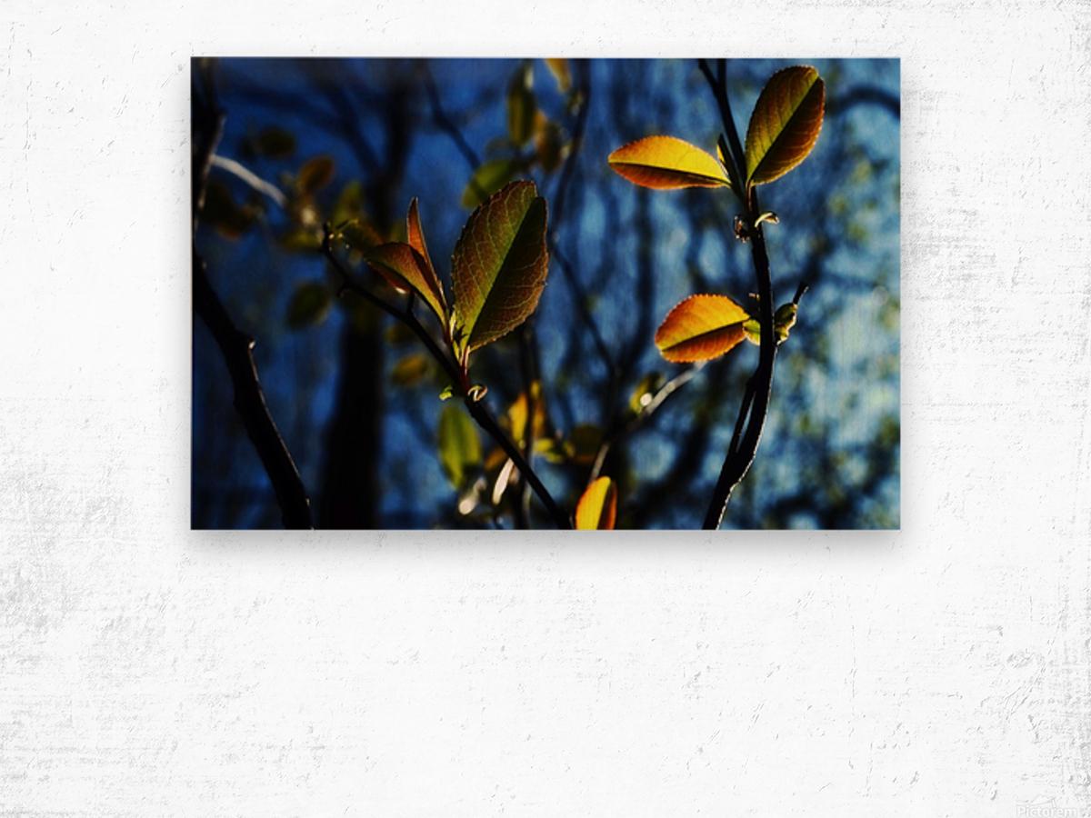 Pop Color Summer Flowers Wood print