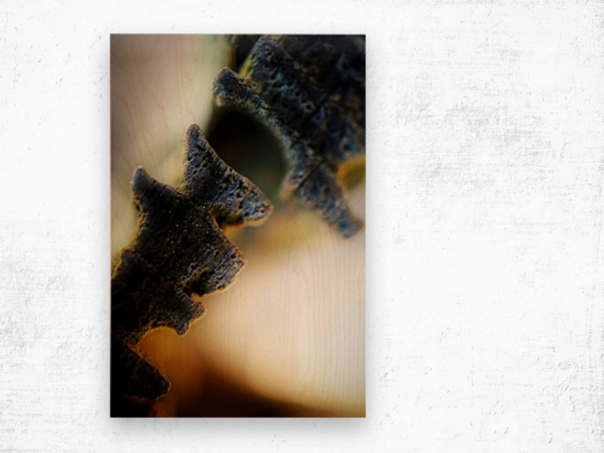 Abstract Macro Nature Photography 111 Wood print